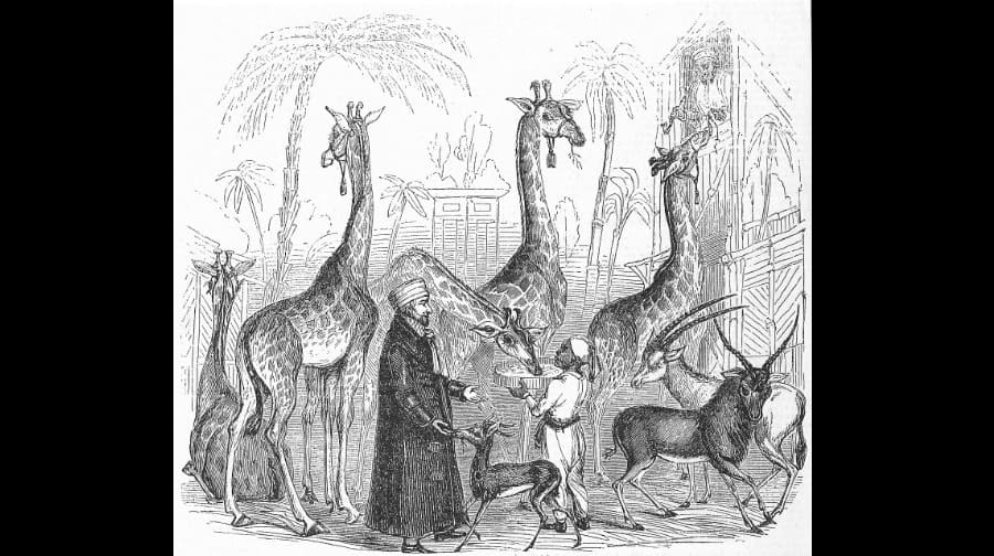 Walworth Had A Zoo Fit For Queen Victoria And 8 000 Guests A Day